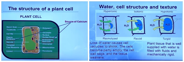 The structure of Plant cells